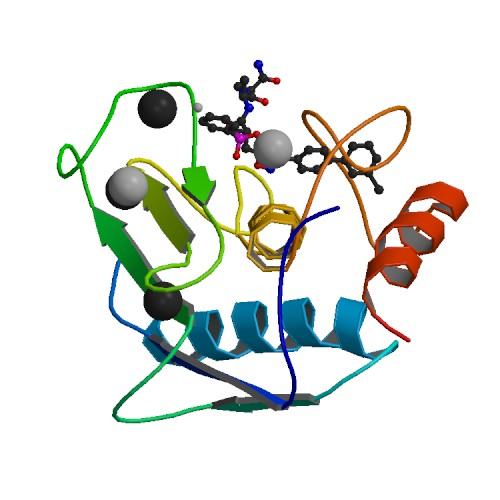 MMP12 protease
